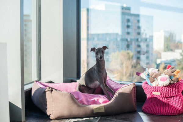 BOWN AND BONE HUNDESENG 'CLASSIC' PINK 3